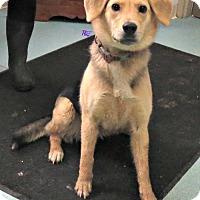 Adopt A Pet :: Spring - Baltimore, MD