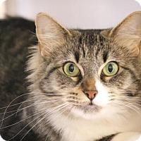 Adopt A Pet :: Lia - Dallas, TX