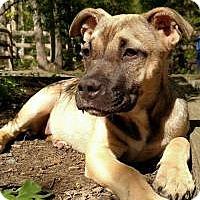 Adopt A Pet :: Lucy - Marlton, NJ