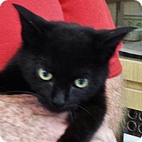 Adopt A Pet :: Misha - Lighthouse Point, FL
