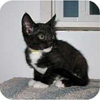 Adopt A Pet :: Darcy - Shelton, WA