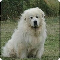 Adopt A Pet :: Lilly - Minneapolis, MN