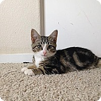 Adopt A Pet :: Gus - Modesto, CA