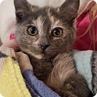Adopt A Pet :: Sealy - North Highlands, CA