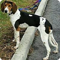 Adopt A Pet :: Zee - Caledon, ON