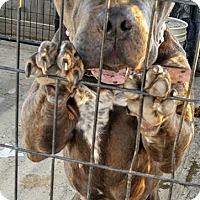 Adopt A Pet :: Maddie - Fowler, CA