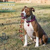 Adopt A Pet :: Penny - Centerburg, OH