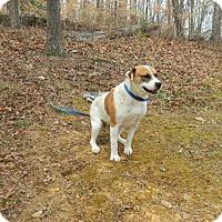 Adopt A Pet :: Mylie - Randleman, NC