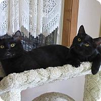 Adopt A Pet :: George & Fred - Glenwood, MN