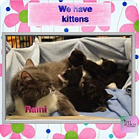 Adopt A Pet :: Raini - Washington, PA