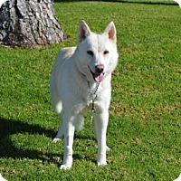 Adopt A Pet :: Star - San Diego, CA
