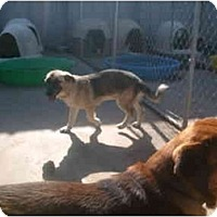 Adopt A Pet :: Naomi - Anton, TX