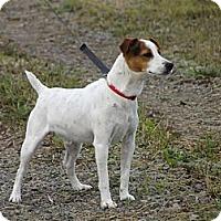 Adopt A Pet :: Zorro - Rigaud, QC
