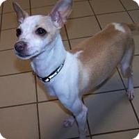 Adopt A Pet :: Bella - Jackson, MI