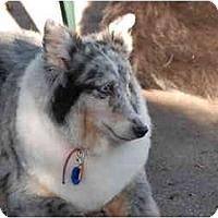 Adopt A Pet :: Kayley - Ft. Myers, FL