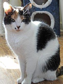 Adopt A Pet :: Caleigh  - Devon, PA
