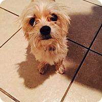 Adopt A Pet :: Kovu - Lodi, CA
