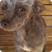 Adopt A Pet :: Tycho - Henderson, NV