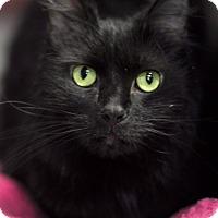 Adopt A Pet :: Dolly - Jackson, NJ
