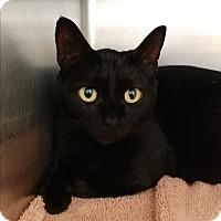 Adopt A Pet :: Marie - Umatilla, FL