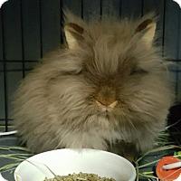 Adopt A Pet :: Lily Bug (pending) - Baton Rouge, LA