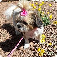 Adopt A Pet :: Isabella - Las Vegas, NV