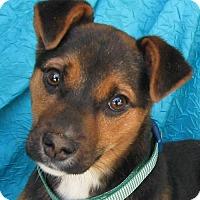 Adopt A Pet :: Joni Bene-Care - Cuba, NY