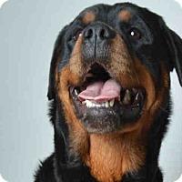 Adopt A Pet :: Lexi - Tracy, CA