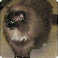 Adopt A Pet :: Misty - Keizer, OR