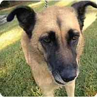 Adopt A Pet :: Maggie - Washington, NC