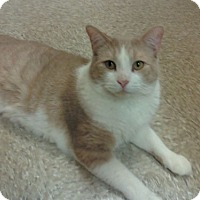Adopt A Pet :: Joey - Sunderland, ON