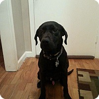 Adopt A Pet :: Tyson - Bedminster, NJ