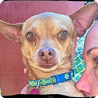 Adopt A Pet :: Tabasco - Bastrop, TX