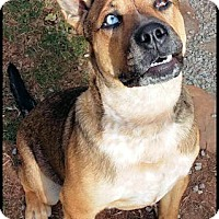 Adopt A Pet :: Luke - Norristown, PA