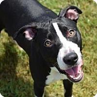 Adopt A Pet :: Molly - Gulfport, MS