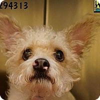 Adopt A Pet :: Rocky - Memphis, TN