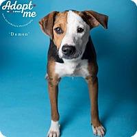 Adopt A Pet :: Damon - New Milford, CT