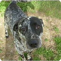 Adopt A Pet :: Patches McGee - Eden, NC