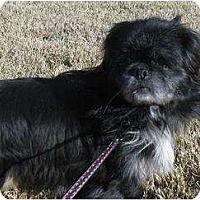 Adopt A Pet :: Black Jack - Tyler, TX