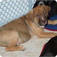 Adopt A Pet :: Rocky - Minneola, FL