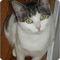 Adopt A Pet :: Pumpkin - Kensington, MD