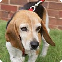 Adopt A Pet :: Judy - Norman, OK