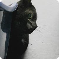 Adopt A Pet :: Mork - Medina, OH