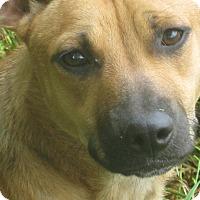 Adopt A Pet :: Butternut - Harrisburgh, PA