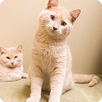 Adopt A Pet :: Monterey - Chicago, IL