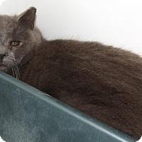 Adopt A Pet :: Bach - Orleans, VT