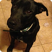 Adopt A Pet :: June - Phoenix, AZ