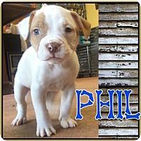 Adopt A Pet :: Phil - Conroe, TX