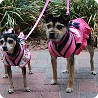 Adopt A Pet :: DAISY AND DIXIE - Las Vegas, NV