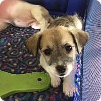 Adopt A Pet :: Emmett - Ashville, OH